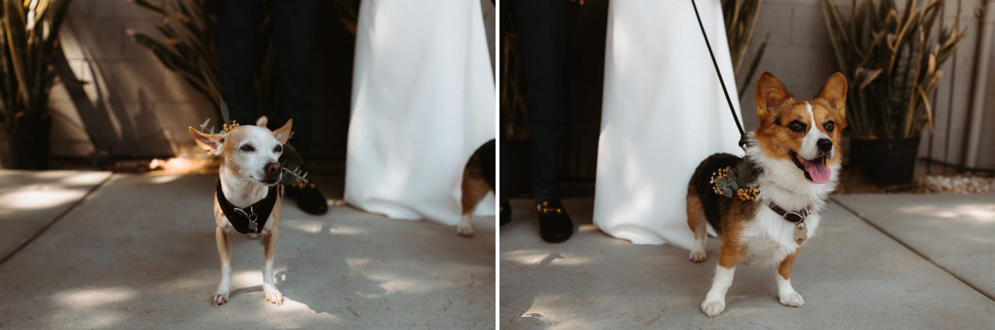lautner compound wedding 061