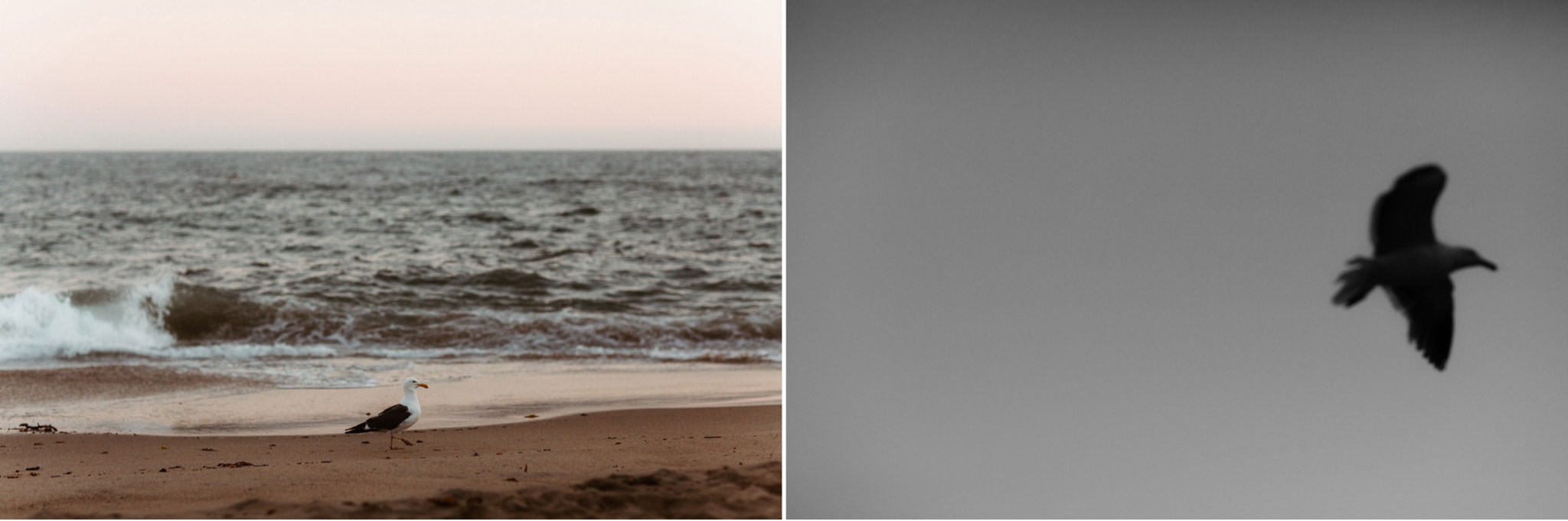 malibu beach proposal 003